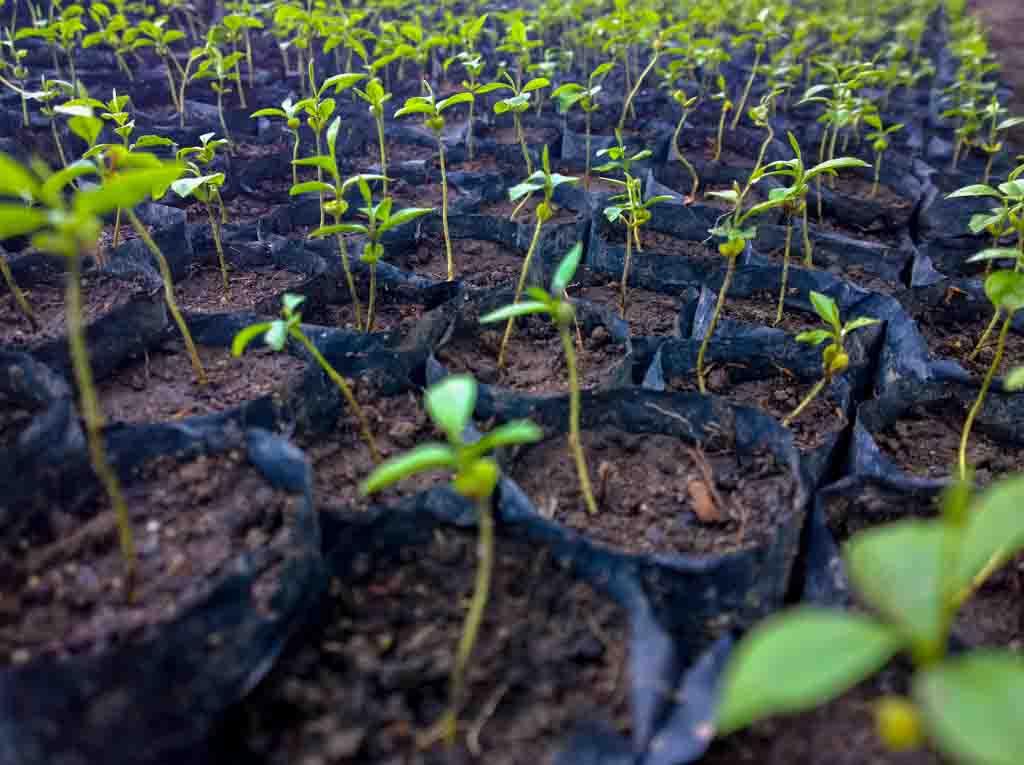 Rimba Raya Delivers Seeds of Change