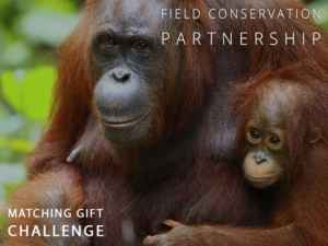 Rimba Raya | Biodiversity Reserve | Get Involved | OFI Matching Gift Challenge