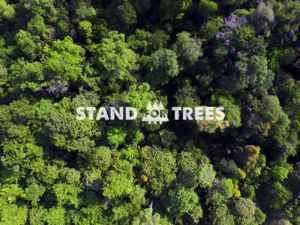 Rimba Raya | Biodiversity Reserve | Get Involved | Stand For Trees Certificates