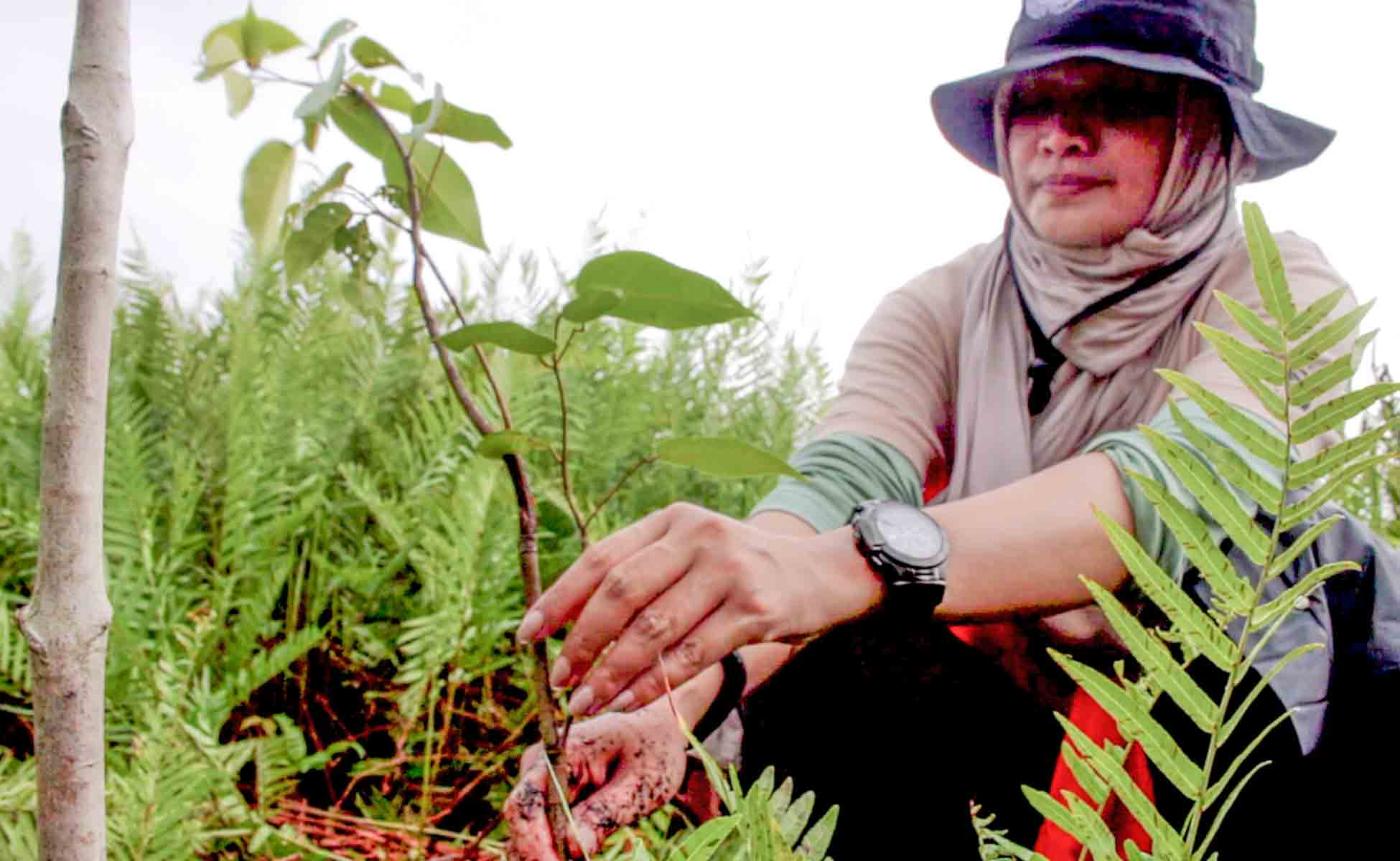 Rimba Raya | Community Initiative | Biodiversity Initiative | Tree Planting Initiative